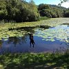forest-view-dog-jumping-lake